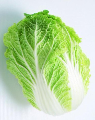大白菜结构图